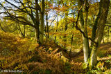 Snelsmoore Common