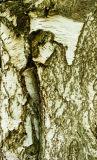 Tree Trunk, Snelsmore Common