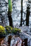 Snelsmoor Common