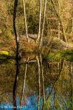 Snelsmore Common