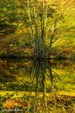 Water reflection in Stourhead lake