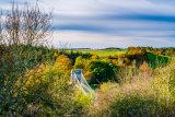 The Chain Bridge Near Berwick