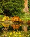 Reflection in stourhead lake