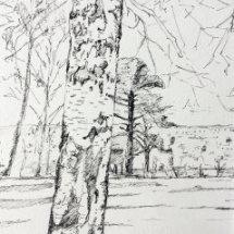 Rosehill trees