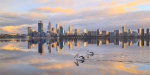 Pelicans on the Swan River
