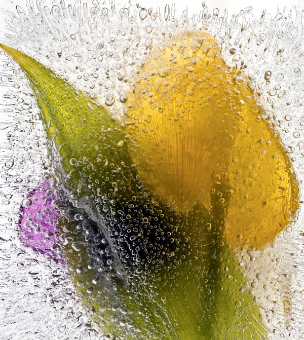 Ice Flowers #7