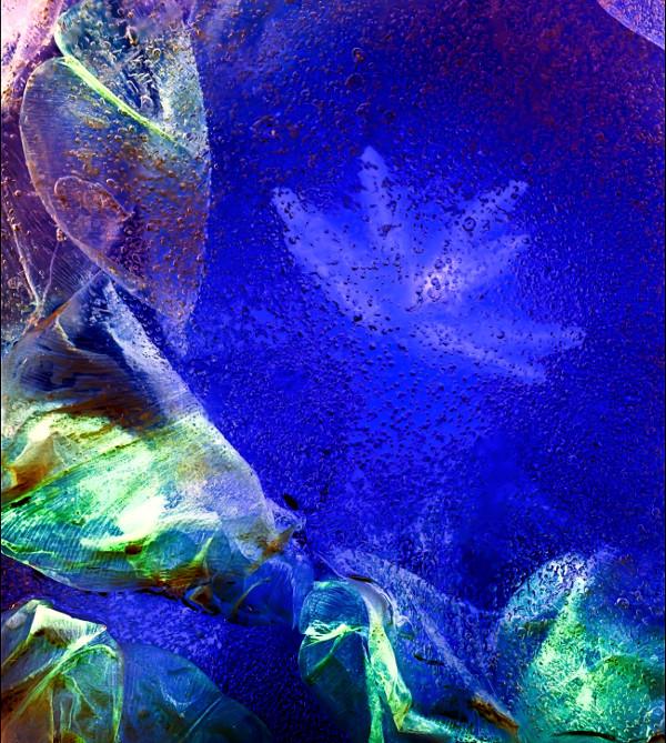 Tulip in blue