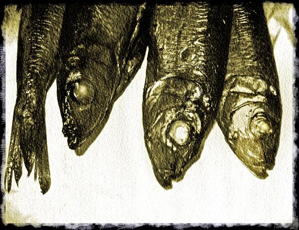 smoked herrings