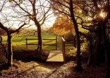 Autumnal Gernon Bushes