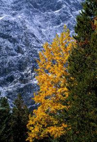 Aspen(Fall)-Cascade Mtn- BNP