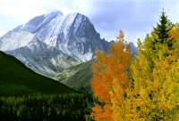 Fall Foliage - KCntry C+Cweb