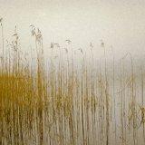 GrassesMossdale Loch(Web2015)