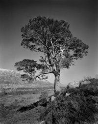 TFL-Iconic Tree#1Final