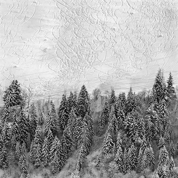 Snow & Trees