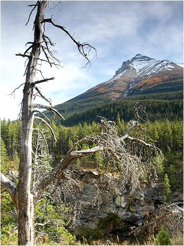 Dead Tree & Mountain