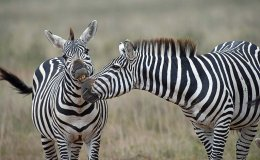 Nairobi National Park and Transit to Laikipia