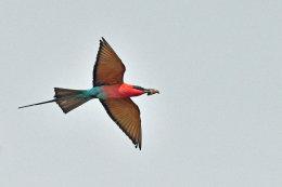 Birds of Mana Pools, Zimbabwe