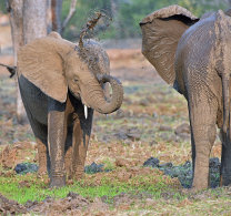 Mammals of Zimbabwe October 2015