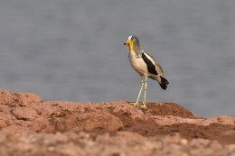 Birds of Lake Kariba, Zimbabwe