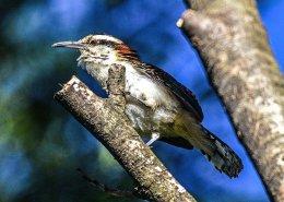 Birds of San Jose,Costa Rica.