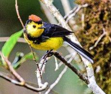 Birds of the Highlands, Costa Rica
