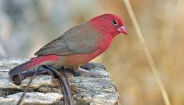 Eritrea Wildlife December 2014