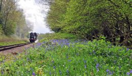 And the bluebells were out !!
