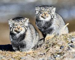 Mammals of China 2016