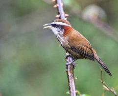 Birds of Sichuan 2016