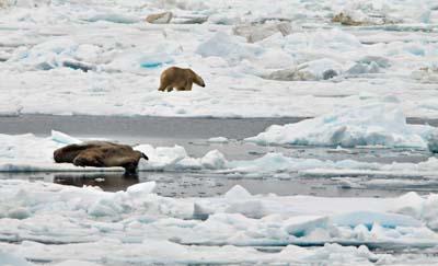 Polar Bear and Walrus.