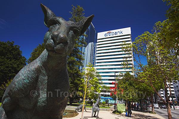 Nosey Kangaroo, Perth