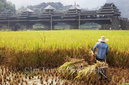Paddy Worker, Chenyang, Guangxi