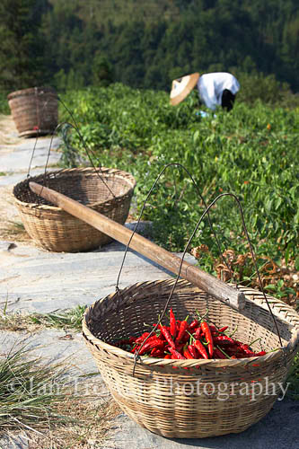 Chilli Picker, Ping An, Guangxi