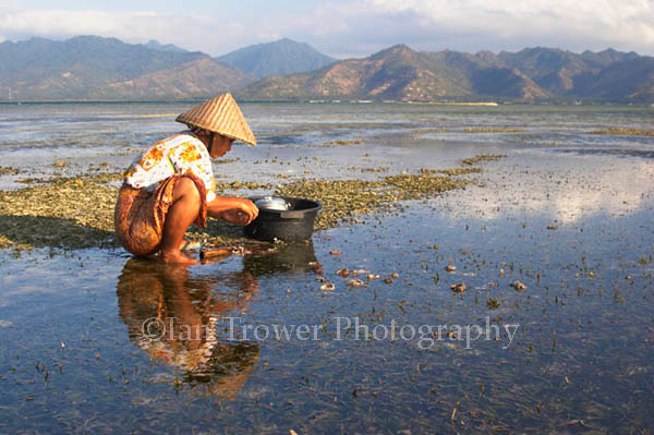 Woman Collecting Shellfish, Gili Air, Lombok