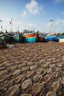 Dried fish, Negombo