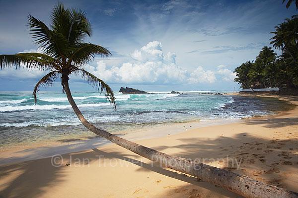 Palm tree on Thalpe beach
