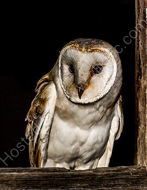 3rd. Night owl