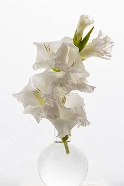 3rd. White gladioli