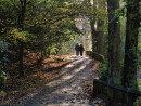 HC. Autumn in the park