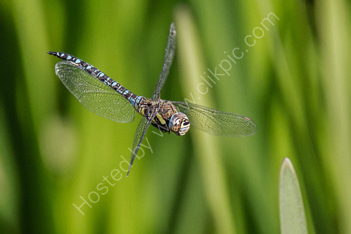 2nd. Dragonfly