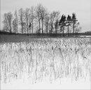 HC. Edge of the frozen lake
