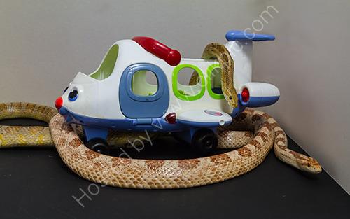 HC. Snakes on a plane