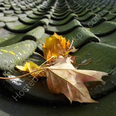 Autumn on the roof