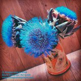 Electric Blue Thistle