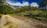 Picos pathway