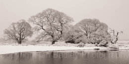 Oak tree shapes in winter with snow and pond in the New Forest National Park, Hampshire, England