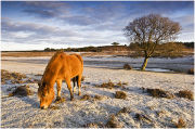 Hoarfrost at Longslade Bottom in the New Forest