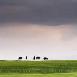 Minimalist trees in Tuscany, Italy