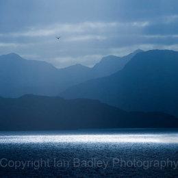 Seagull flies over Loch Torridon, Applecross, Scotland