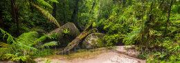 Australia, Queensland, Mossman Gorge, Daintree National Park